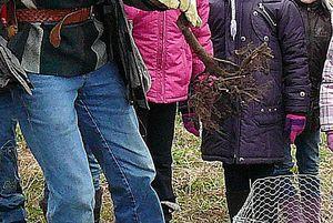 Der erste quittenbaum auf der streuobstwiese in hersbruck
