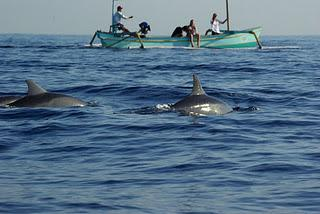 Swimming with Dolphins at Lovina