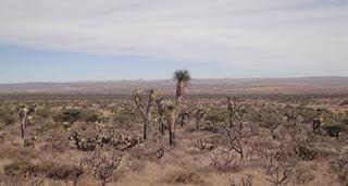 Zacatecas - Mazatlán: Wind, Kälte und anstrengende Abfahrt