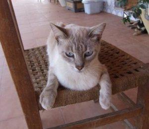 Als Flugpate Katzen helfen