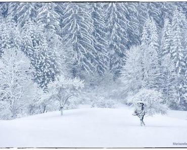 Tiefster Winter im Mariazellerland – 8. Jänner 2012