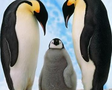 Sei ein Pinguin! - Finde Dein Element!