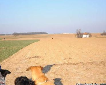 Hundebegegnung (Look at that!)