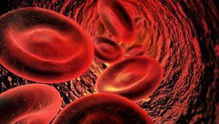 Blut ist Leben