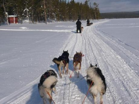 Huskytour in Finnland: Back to the roots