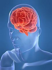 Populäre Irrtümer über das Gehirn werden entkräftet