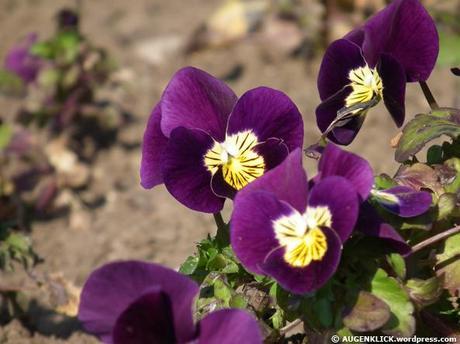 Bunte blumen im botanischen garten teil 1 2 for Bunte glassteine garten