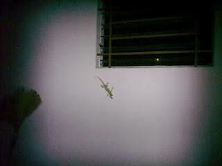 Nächtlicher Besucher - Nightly visitor
