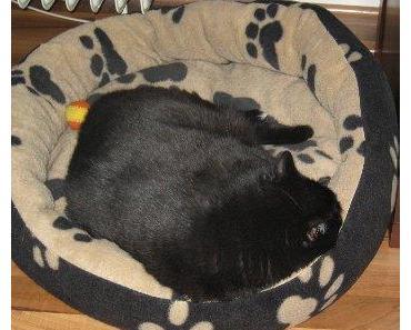 Katzenbett – Eines der wichtigsten Utensilien