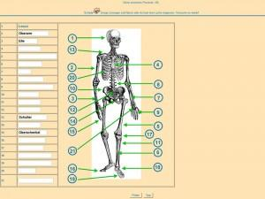 biologie skelettaufbau des menschen hilfe. Black Bedroom Furniture Sets. Home Design Ideas
