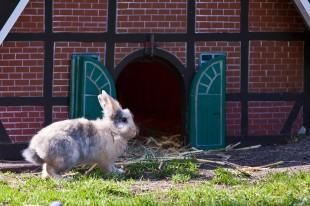 Einen Kaninchenstall für den Garten selber bauen