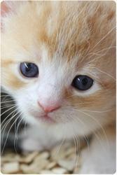 Cute Kittens - NKFOM-Katzen-Content