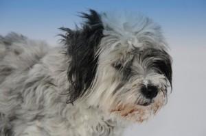 Hundefutter Test – Leserbrief