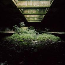 Atelier.Galerie Hannover: Urban Wilderness