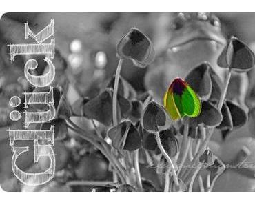 Glück ✐ Assoziation 2012