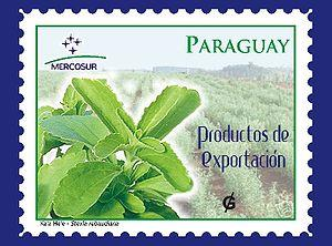Paraguay Post Stamp, containing a Stevia field
