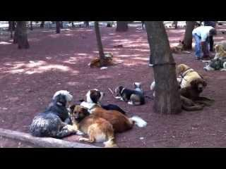 Doggies im Parque Mexico
