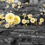 Der Mensch und seine Pilze