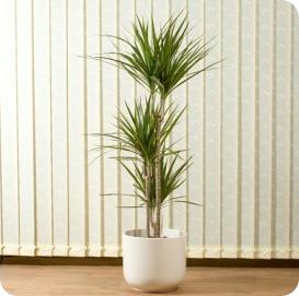 Schöne Zimmerpflanzen Bei Stubenblumende