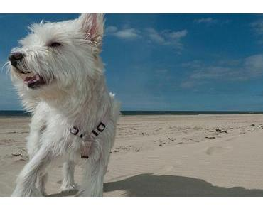 Welthundetag oder der Welttag des Hundes