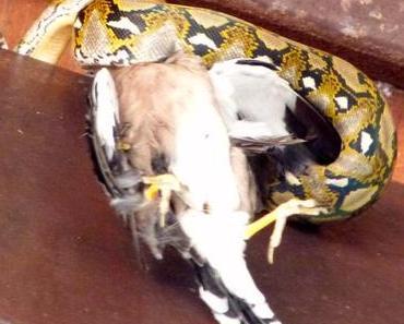 Schlangenfraß zum Frühstück!