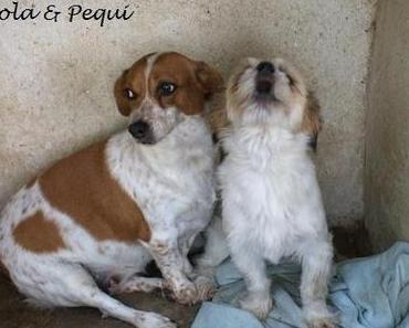 Hunde der Finca Lucendum suchen ein liebevolles Zuhause [Teil 1 - Hündinnen]