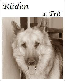 Diese Hunde der Finca Lucendum suchen ein liebevolles Zuhause
