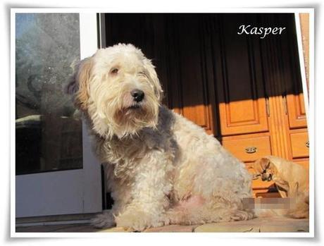 Hunde Der Finca Lucendum Suchen Ein Liebevolles Zuhause R 252 Den 2 Teil