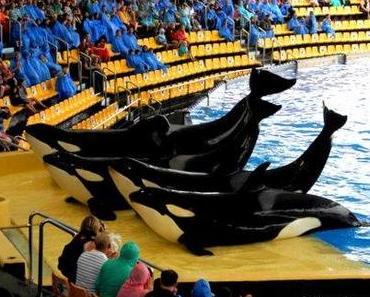 Orcas auf Teneriffa