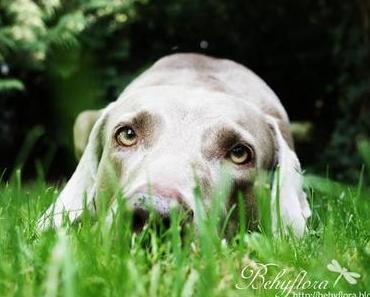 Der perfekte Hundeblick
