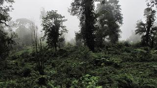 Trekking in Costa Rica? - Caminata Sukia!