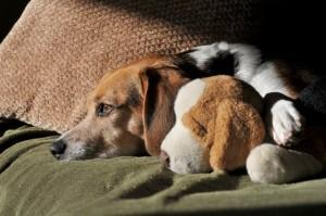 Hund als neues Familienmitglied braucht gutes Hundefutter