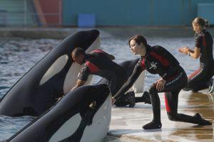 Stéphanie (Marion Cotillard) liebt ihre Killerwale