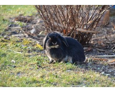 Kaninchen verschenken – tun Sie das nicht