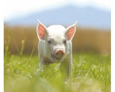 Tierhaltung wird durch Effektive Mikroorganismen revolutioniert
