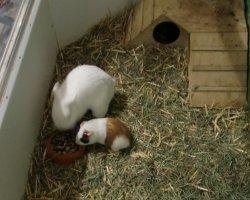 Kaninchen im Zoogeschäft kaufen – tun Sie das nicht