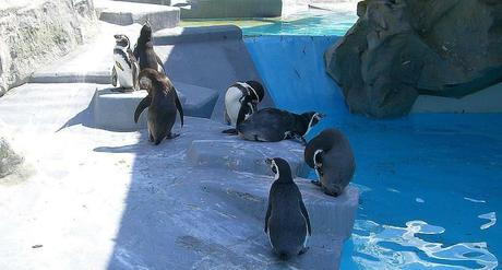 Kuriose Feiertage - 20. Januar - Penguin Awareness Day - 2