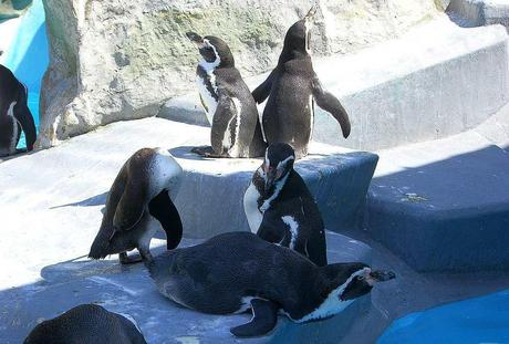 Kuriose Feiertage - 20. Januar - Penguin Awareness Day - 3