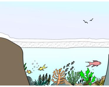 Warum erfrieren Fische nicht?