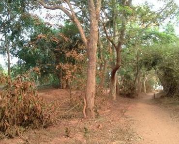 Alltag in Auroville