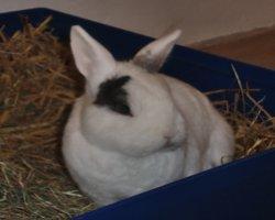 Muss man Kaninchen waschen?