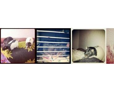 Grisu und die Rattenschar