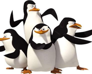 Kennst Du Deinen Pinguin schon?