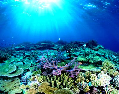 Great barrier reef essay