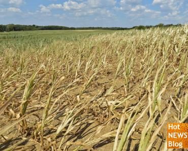 Getreidepreise gehen durch die Decke
