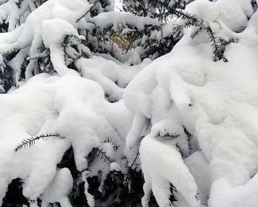 Der Winter schlug zurück