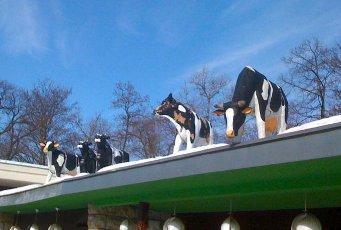 Von der Milch leben müssen