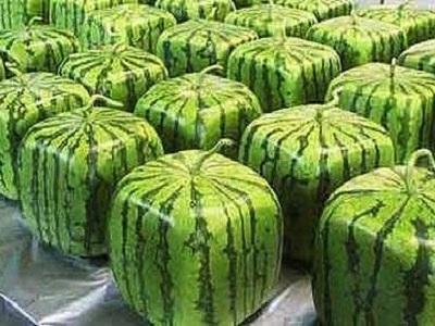 viereckige-wassermelonen-in-japan-L-xi0D
