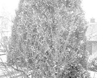 Kälterekord im März