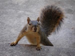 Wie Veränderung von Dauer ist oder: sei wie das Eichhörnchen!